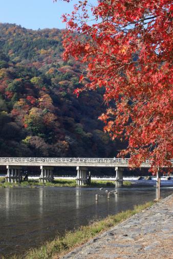 Japanese Maple「Foliage at Arashiyama, Kyoto Prefecture, Honshu, Japan」:スマホ壁紙(5)