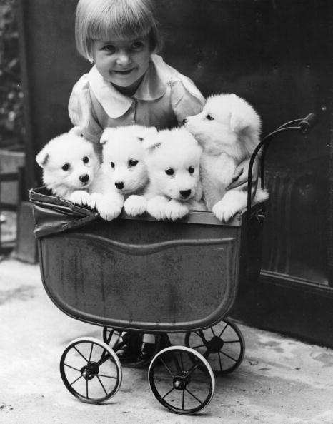 Baby Carriage「Puppies In A Pram」:写真・画像(11)[壁紙.com]