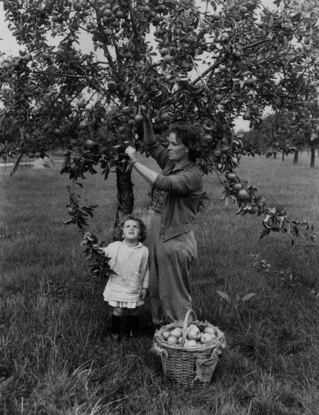 Monty Fresco「Apple Picking」:写真・画像(3)[壁紙.com]