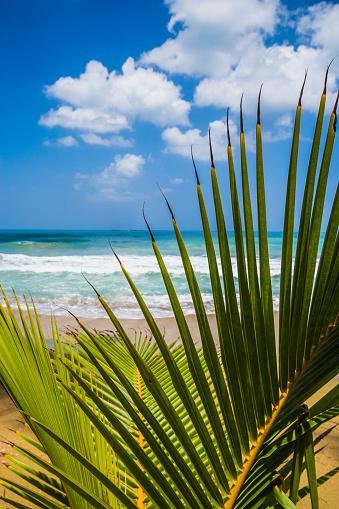 Frond「Playa Bonita」:スマホ壁紙(16)