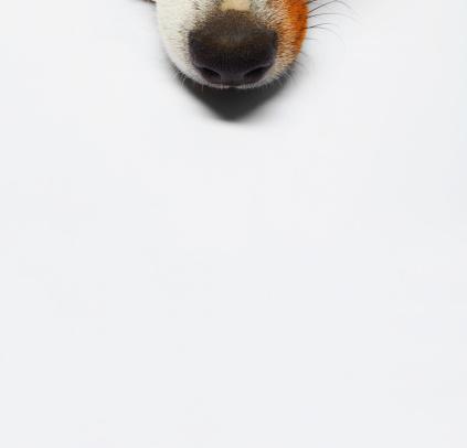 横たわる「犬」:スマホ壁紙(17)