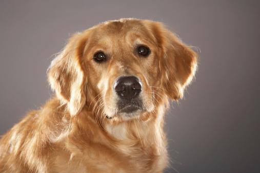 Pets「Dog」:スマホ壁紙(19)