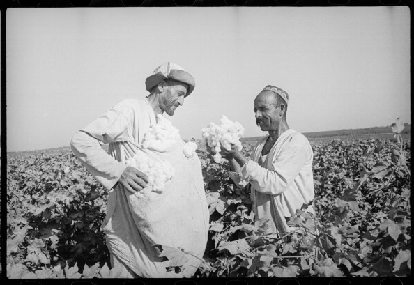 Uzbekistan「In The Cotton Field」:写真・画像(6)[壁紙.com]