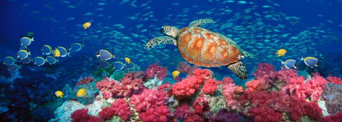 サンゴ「Green turtle (Chelonia mydas) (Digital Composite)」:スマホ壁紙(12)