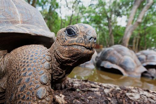 Green Turtle「Green Turtle on Changuu Island in Zanzibar」:スマホ壁紙(10)