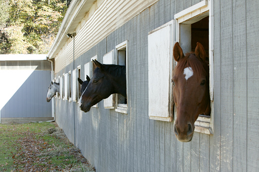 Horse「Horse barn with horse heads sticking out of the windows」:スマホ壁紙(8)