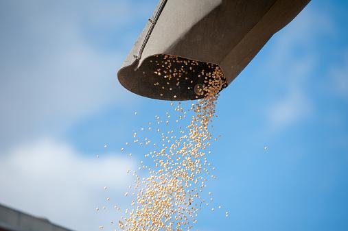 Harvesting「Harvested grain」:スマホ壁紙(1)