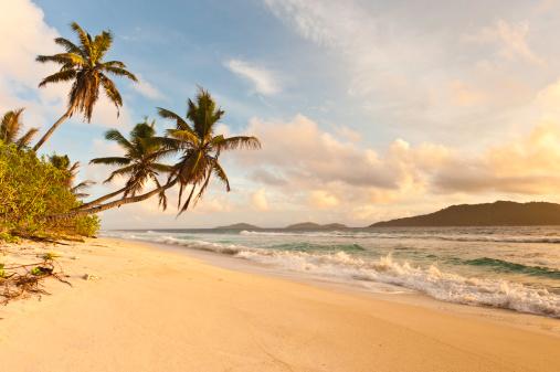 Frond「Desert island sunrise idyllic palm trees golden sand tropical beach」:スマホ壁紙(7)