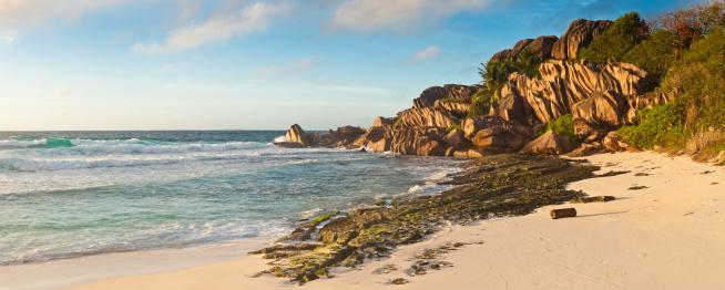 Frond「Desert island beach golden sands palm trees ocean surf panorama」:スマホ壁紙(15)