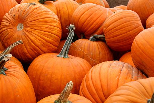 Heap「Load of Pumpkins」:スマホ壁紙(16)