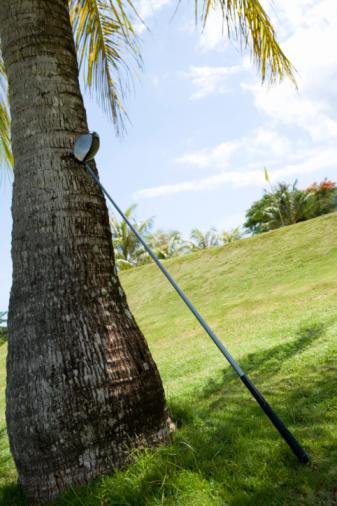 Golf Links「Golf Club Against Palm Tree」:スマホ壁紙(7)