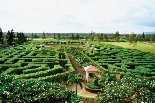 Oahu「High angle view of the dole pineapple plantation, Oahu, Hawaii, USA」:スマホ壁紙(9)