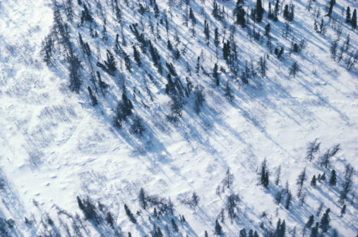 冠雪「High angle view of snowcovered forest, James Bay, Quebec, Canada」:スマホ壁紙(7)