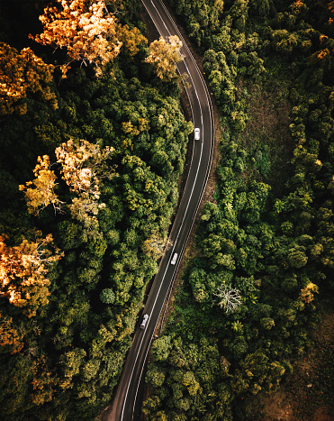 Queensland「high angle view of the road in australia in autumn」:スマホ壁紙(16)