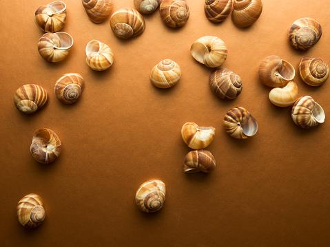 カタツムリ「High angle view of escargot shells on copper coloured background with copy space」:スマホ壁紙(4)