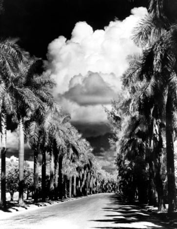 Boulevard「Palms And Clouds」:スマホ壁紙(11)