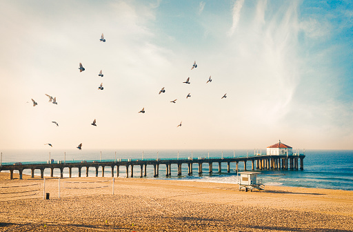 Manhattan Beach「Manhattan Beach pier with birds」:スマホ壁紙(15)