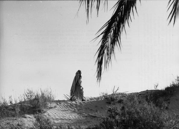Animal Body Part「Solitary Walker」:写真・画像(2)[壁紙.com]