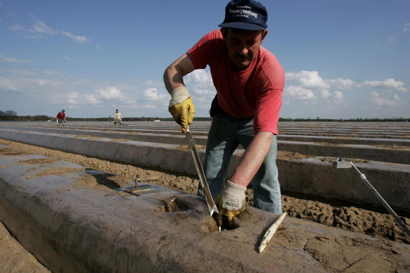 Asparagus「Asparagus Harvest Draws Seasonal Workers」:写真・画像(7)[壁紙.com]