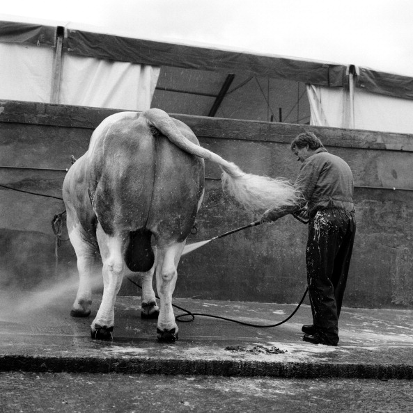 Tom Stoddart Archive「Great Yorkshire Show 2010」:写真・画像(16)[壁紙.com]