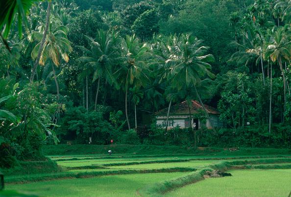 Copy Space「Rice Paddies, Sri Lanka」:写真・画像(13)[壁紙.com]
