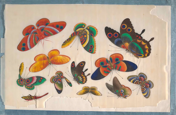 Multi Colored「Album Containing Twelve Paintings Of Insects」:写真・画像(18)[壁紙.com]