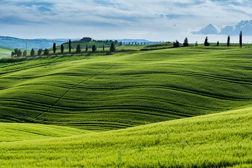 Chianti Region「Morning landscape from Tuscany」:スマホ壁紙(18)
