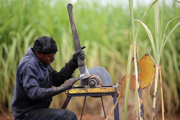Sharpening「Workers Harvest Sugar Cane」:写真・画像(6)[壁紙.com]