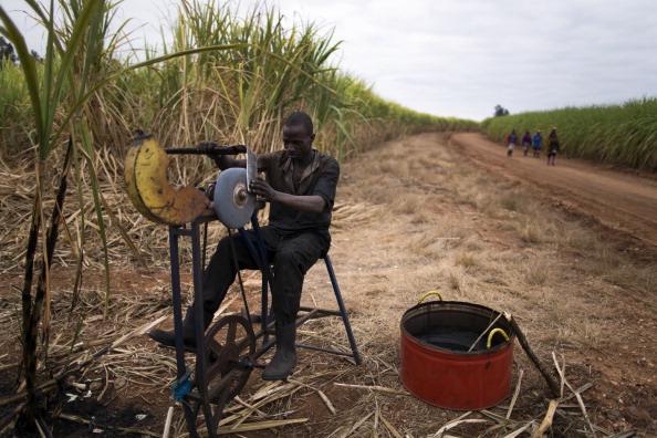 Sharpening「Workers Harvest Sugar Cane」:写真・画像(8)[壁紙.com]