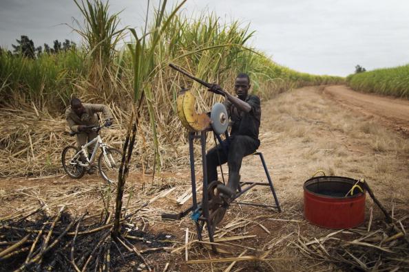 Sharpening「Workers Harvest Sugar Cane」:写真・画像(3)[壁紙.com]