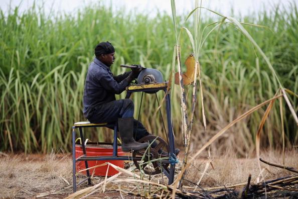 Sharpening「Workers Harvest Sugar Cane」:写真・画像(11)[壁紙.com]
