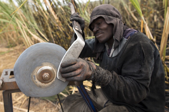 Sharpening「Workers Harvest Sugar Cane」:写真・画像(5)[壁紙.com]