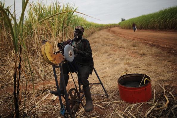 Sharpening「Workers Harvest Sugar Cane」:写真・画像(4)[壁紙.com]