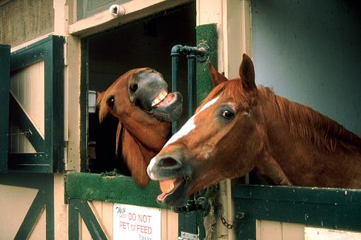 Horse「Laughing horses」:スマホ壁紙(15)