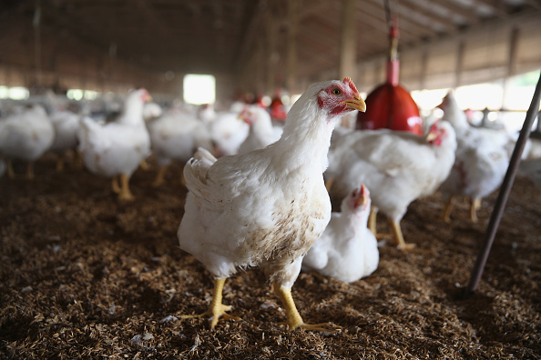 Farm「Russia' Ban On US Agricultural Imports To Affect US Food Industry」:写真・画像(9)[壁紙.com]