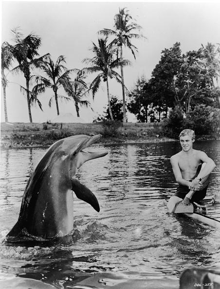 Part of a Series「Luke Halpin With TV's 'Flipper'」:写真・画像(8)[壁紙.com]
