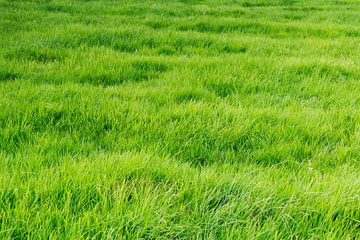 Pasture「Patch of grass」:スマホ壁紙(14)