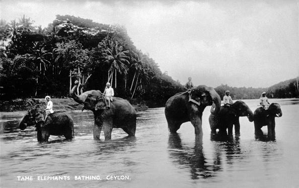 1900「TAME ELEPHANTS BATHING」:写真・画像(15)[壁紙.com]