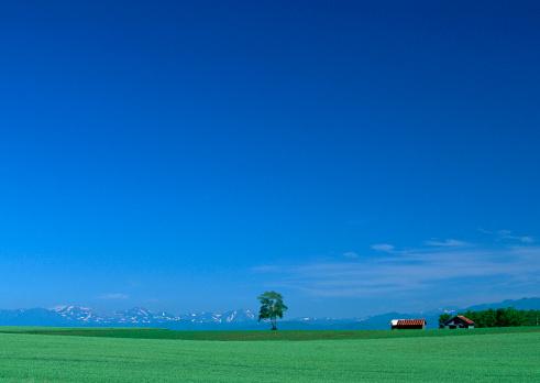 草地「Grassy Plain」:スマホ壁紙(12)