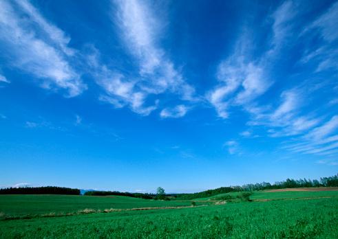 Hokkaido「Grassy Plain」:スマホ壁紙(1)