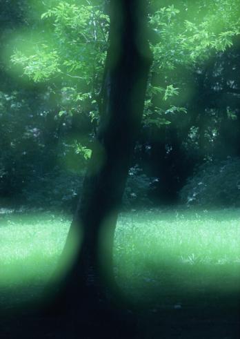 Nikko City「Grassy Plain」:スマホ壁紙(16)