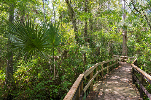 Footbridge「USA, Florida, Copeland, Fakahatchee Strand Preserve State Park, boardwalk through swamp」:スマホ壁紙(10)