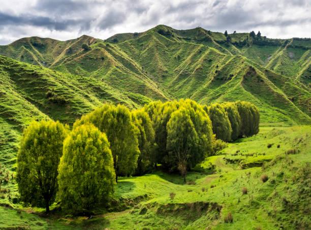 New Zealand, North Island, Manawatu-Wanganui Region, landscape:スマホ壁紙(壁紙.com)