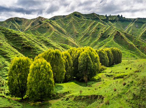 Rolling Landscape「New Zealand, North Island, Manawatu-Wanganui Region, landscape」:スマホ壁紙(1)