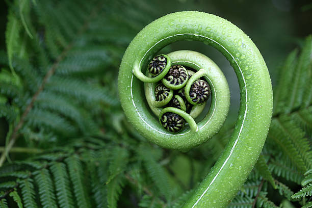 New Zealand fern:スマホ壁紙(壁紙.com)