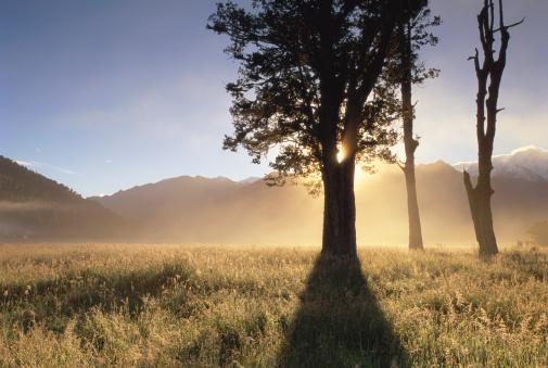 Westland - South Island New Zealand「New Zealand, South Island, Westland National Park, morning」:スマホ壁紙(12)