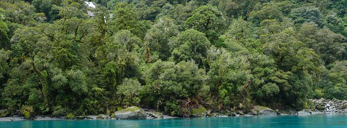 Westland - South Island New Zealand「New Zealand, South Island, Mount Aspiring National Park.」:スマホ壁紙(12)