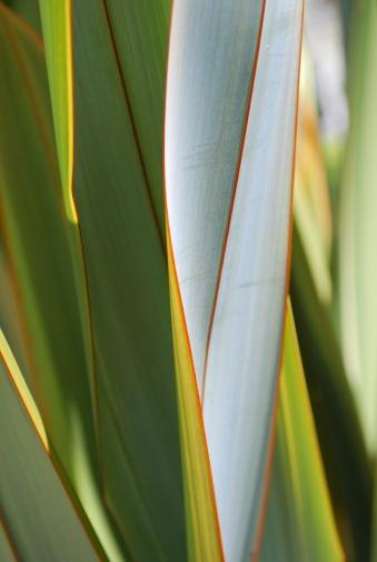 Indigenous Culture「New Zealand Flax (Phormium)」:スマホ壁紙(3)