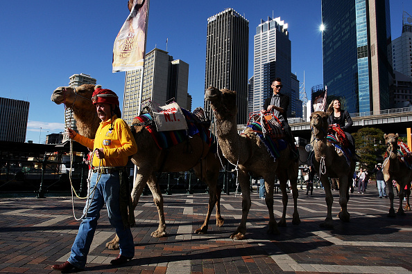 """Accessibility「Camels Offer Rides In Sydney CBD For """"Hump Day""""」:写真・画像(15)[壁紙.com]"""
