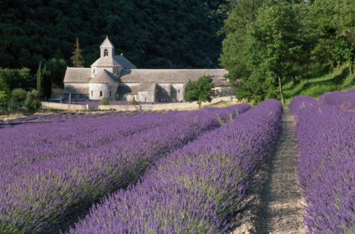 Abbey - Monastery「France, Provence, The Vaucluse, Abbey by field of lavender」:スマホ壁紙(15)